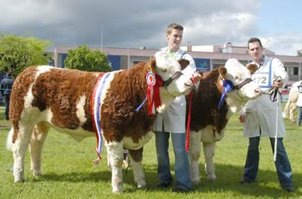The Balmoral Show qualifiers for the Ivomec Super Pair of the Year were Clonguish Bambi and Clonguish Brooklyn shown by brothers Shane and Paul McDonald, Tempo