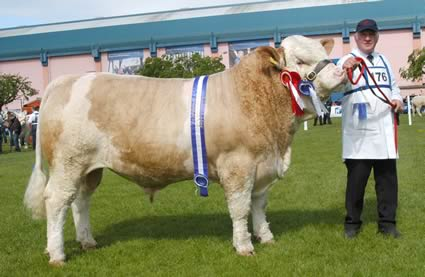 David Hazelton, Dungannon, exhibited Ranfurly Barrister, the male and reserve supreme Simmental champion, and reserve interbreed beef bull performance class winner.