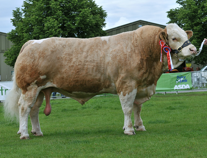 Reserve Supreme Champion Heathbrow Tristar exhibited by Williams Simmentals