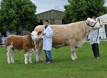 Beef Pairs Championship Cow with calf at foot, Popes Princess Victoria