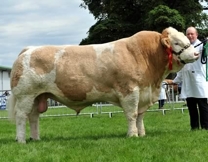 Male Champion Sterling Viking 2nd exhibited by Boddington Estates Ltd
