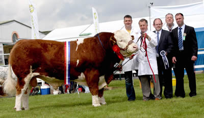 The Simmental champion at Omagh Show was Drumlone Anchor owned by Adrian Richardson, William and Keith Nelson, County Fermanagh. Adding their congratulations are Adrian Adams, Northern Bank, sponsor, and Douglas Barr, Scotland, judge