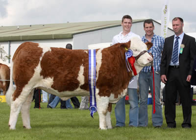 The reserve Simmental champion at Omagh Show was Clonguish Bambi shown by brothers Shane and Paul McDonald, Tempo. Included is judge, Douglas Barr, Scotland.