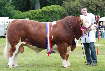 Keith Nelson, Rosslea, exhibited the Simmental champion, Drumlone Anchor