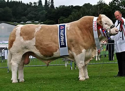 Supreme Champion and Male Champion Sterling Viking 2nd exhibited by Boddington Estates Ltd