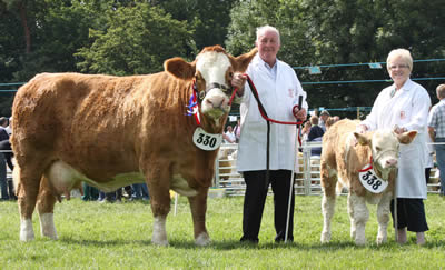 The Simmental champion at Antrim Show was Ranfurly Weikel shown by David and Jackalyn Hazelton, Dungannon