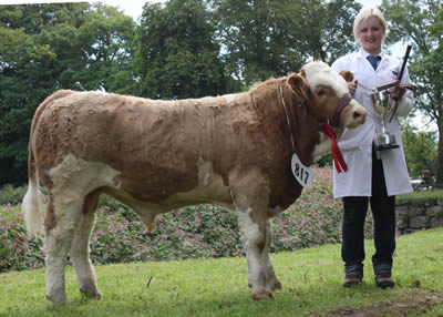 Andrea Graham exhibited Scribby Farms Cracker, the best Simmental calf, owned by Willie Nelson, Rosslea