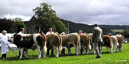 1st July - 31st Dec 2010 bulls