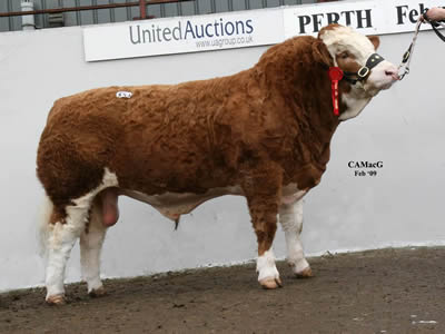 824 Blackford Viceroy Top Price Bull 16,000 Gns