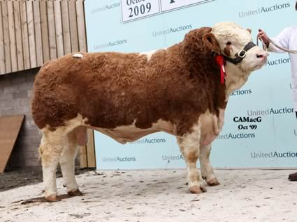 The red ribbon Corskie Woody from Class 7 secured 12,000 gns for Jimmy and Iain Green's Corskie herd giving them the second top price of the sale.