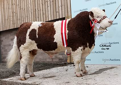 Mr. A. Davies, Cardigan, Ceredigion, Wales, exhibited the Reserve Supreme and Senior Champion, Hirwaun Washy.