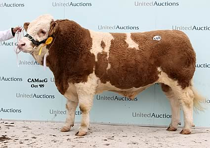 Hockenhull Waterloo, the 16,000 gns sale leader which provided a fond farewell to exhibiting at the Perth Bull Sales for his retiring breeder, Hugo Arnold, Hockenhull Farms, Tarvin, Chester, who recently dispersed his prizewinning herd.