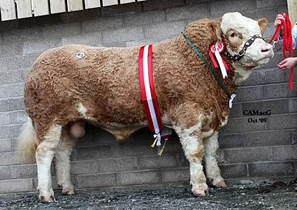 Omorga Watson, the Junior Champion, was exhibited by Messrs H. J. W. and J. C. Moore, Beragh, Co. Tyrone, N.I.
