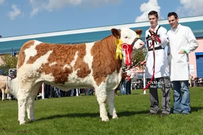 Reserve Female Champion, Celtic Aisling