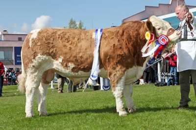 Reserve Supreme and Male Champion, Derrycallaghan Alan 09