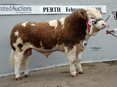 Reserve Senior Champion Blackford Tonka bred and exhibited by Mr W G MacPherson and purchased for 11,000 gns by Mr T Henderson.