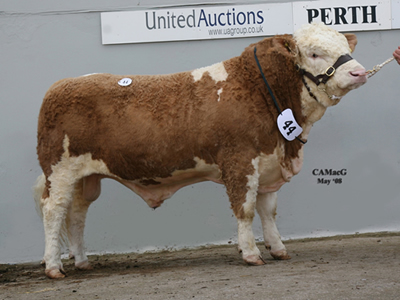 Top price bull Corskie Teezer sold for 5,000gns bred by Mr J Green Sire Ballinalare Farm Nightrider Dam Corskie Alexis 750