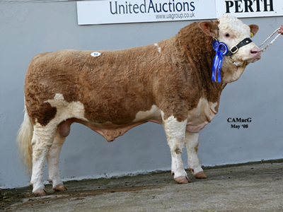 Lot 52 Reserve Champion Corskie Theo bred by Mr J Green sold for 4,800gns Sire Ballinalare Farm Nightrider Dam Corskie Wren 727