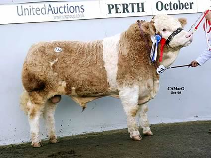 Lot 736 Reserve Overall & Reserve Junior Champion Corrick Viscount 2nd