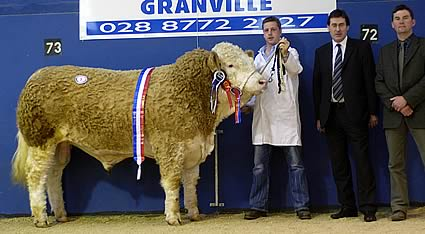 Corrick Santa Supreme and Male Champion – Cecil McIlwaine – Born December 2005 – Sired by Omorga Prince – Sold for top price of 3400 gns.