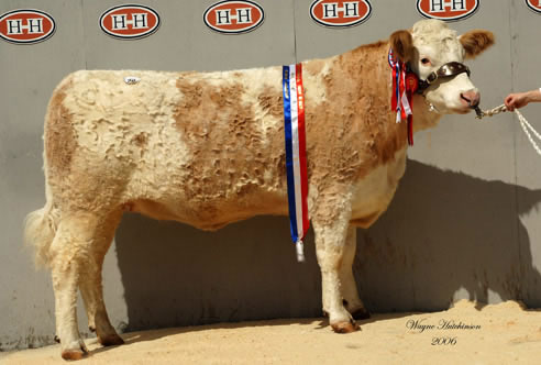 Supreme Champion Holtstead Lydia