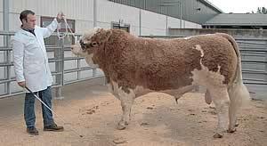 Champion Bull - Dovefields Preditor