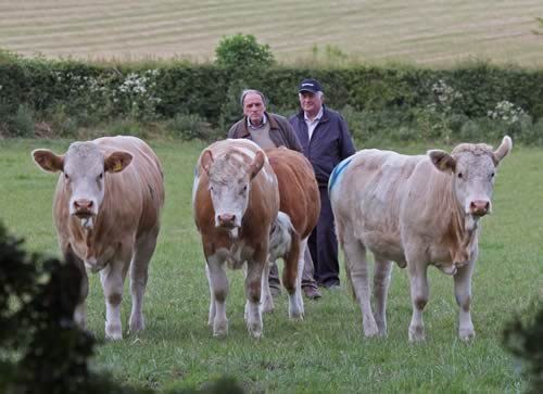 Kenneth Stubbs, Irvinestown, and David Hazelton, Dungannon, pictured at the NI Simmental Club's annual stockjudging competition, Portglenone.