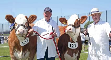 The Ballymena Show qualifiers for the Ivomec Super Simmental Pair of the Year competition were Ranfurly Weikel 6th and and Ranfurly Weikel 7th owned by David Hazelton, Dungannon, who was assisted by Jackson McCaw