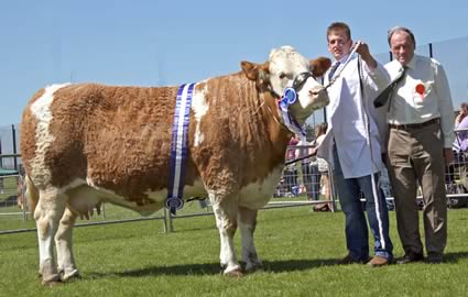 Bruces Hill Cattle Company won the reserve Simmental championship with Hockenhull Natalie 34th. Included is judge Kenneth Stubbs, Irvinestown.