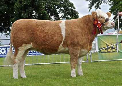 Drumsleed Wylma, Reserve Junior Champion