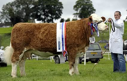 Pat & Frank Kelly Ashland Lady Diamond 3rd, Overall Champion at Enniskillen show and then lifted the Northern Bank Female of the Year.