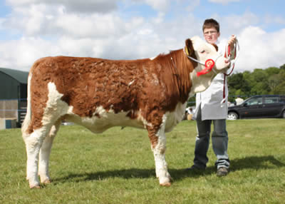 Jamie Boyd, Portglenone, exhibited the first prize winning Simmental calf, Edenbann Walnut, owned by Nevin Smith, Garvagh, at Ballymoney Show.