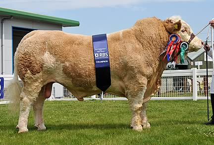 Supreme & Male Champion, Omorgo Veron