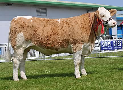 Reserve Female & Junior Champion & also Reserve Junior Interbreed Champion Team Misty 5