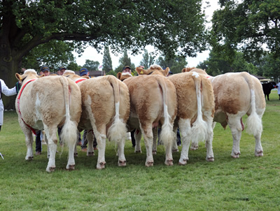 Interbreed Champion Team of Five