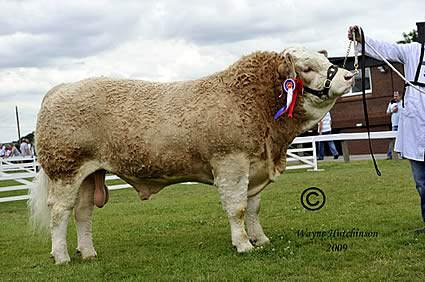 Supreme & Junior Champion Scotland Viper