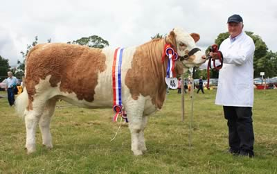 David Hazelton, Dungannon, with Ranfurly Weikel 3rd, the Simmental champion, reserve interbreed beef heifer champion, and second reserve overall beef champion at Castlewellan Show