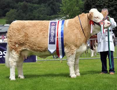 Supreme & Female Champion - Sterling Krumpets Roxanne