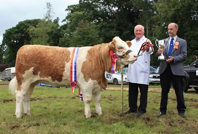 David Hazelton, Dungannon, won his eighth successive Simmental championship with the home-bred heifer Ranfurly Weikel 3rd at Clogher Show. Presenting the Guinness Cup is Scottish judge, Gordon Clarke.