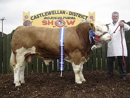 The male and reserve supreme champion at Castlewellan Show was Ranfurly Vanguard V1, owned by David Hazelton, and shown by Stuart Murphy.