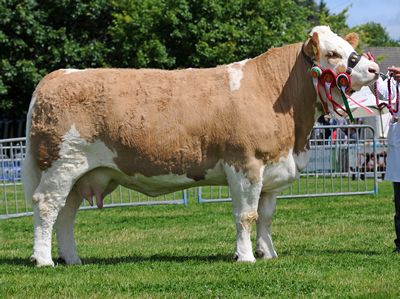 Penwern Rachel - Supreme & Female Champion