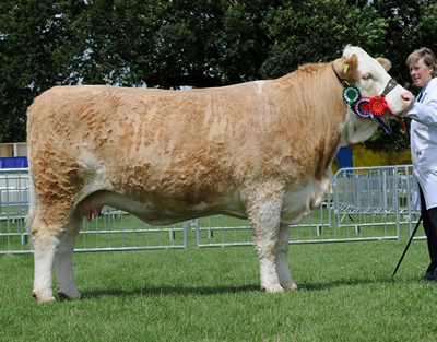 Crackley Cornelia 53R - Supreme and Female Champion