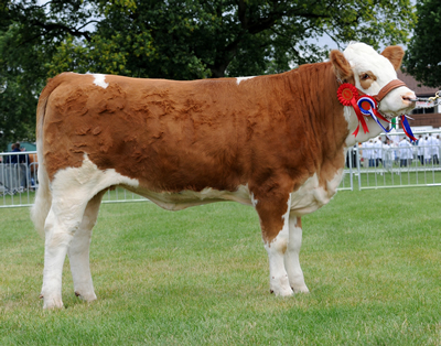 Crackley Cadette 112V - Junior Heifer
