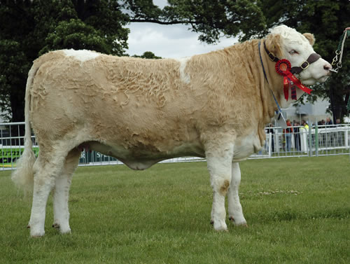 Glenturk Rita - Female and Junior Champion & 1st in class Female born on or between 01.07.04 & 31.12.04