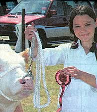 Angharad Jones age 15 years Champion Young Handler, Welsh Region 2005.