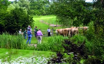 Herd visit to the Shrive family's Brigstock herd.