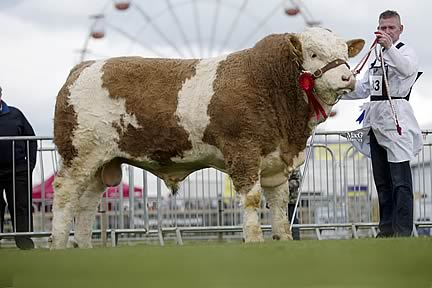 Alastair Shortt exhibited Killynure Darwin, the junior champion and male champion, owned by Raymond Porter, Omagh.
