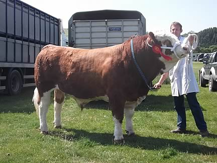 Rhodyn Dandy - Male Champion & Interbreed Reserve Bull