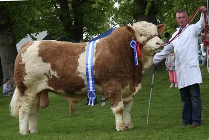 Reserve champion Simmental was Killynure Darwin, owned by Raymond Porter, Omagh, and shown by Alastair Short