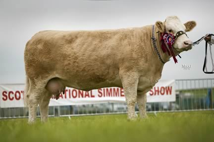 Drumsleed Tabytha - Supreme and Female Champion